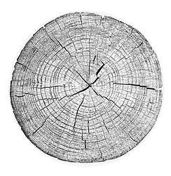 Tree stump Rings Scan Round png.png