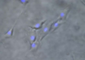 3d-bioprinting-page-3.jpg