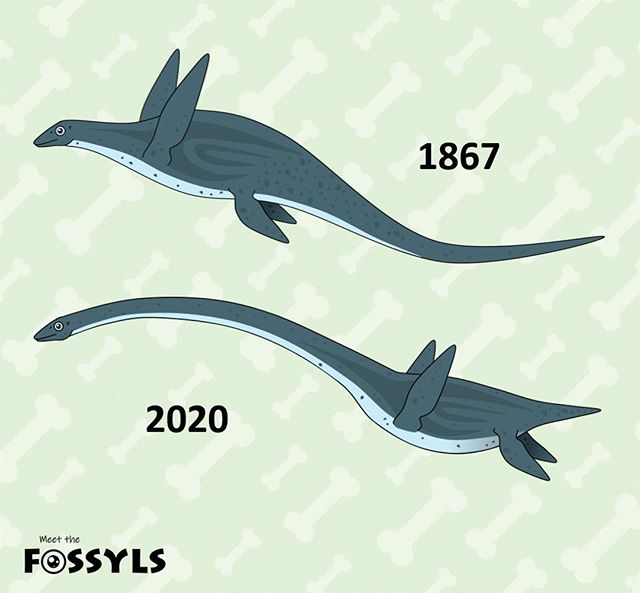 The big mistake: Elasmosaurus