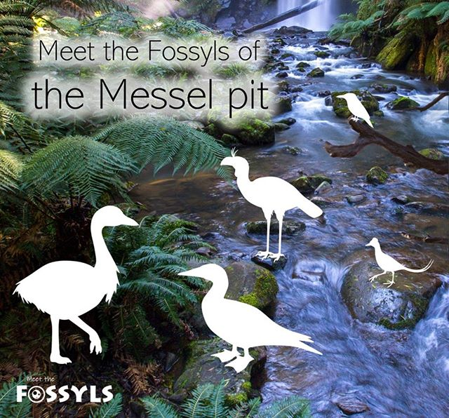 Fossyls of the Messel Pit