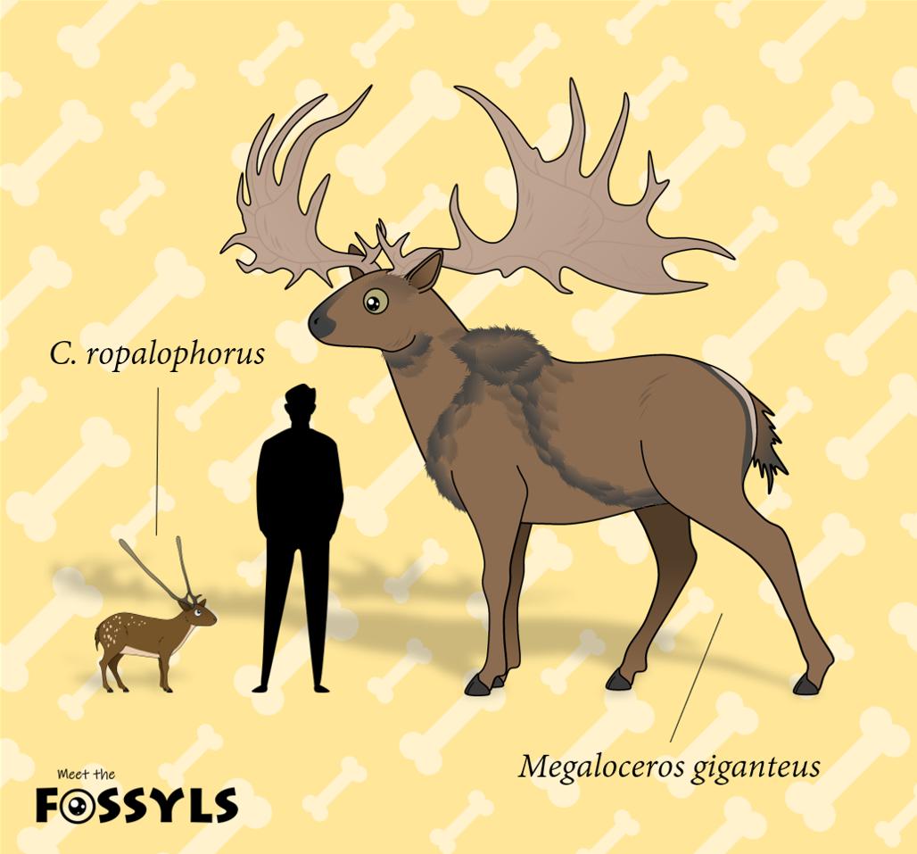 Candiacervus vs Megaloceros