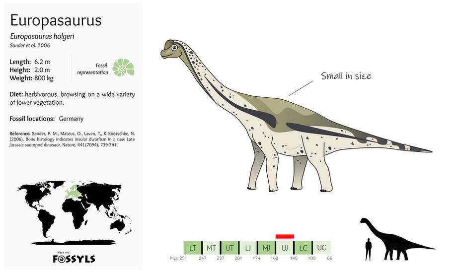 Europasaurus%20holgeri.png