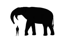 Size comparison extinct dinosaur animal megafauna
