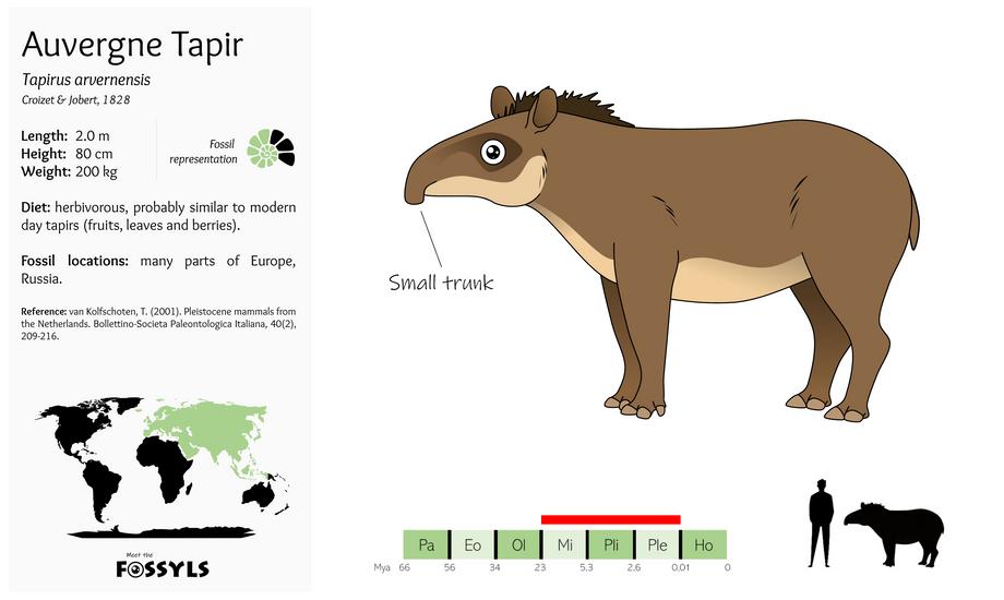 Tapirus%20arvernensis.png