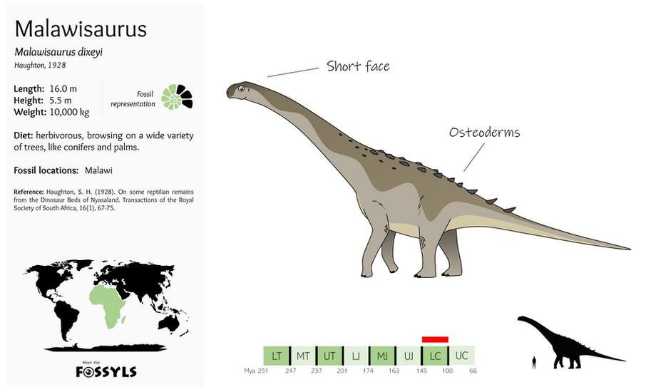 Malawisaurus%20dixeyi.png