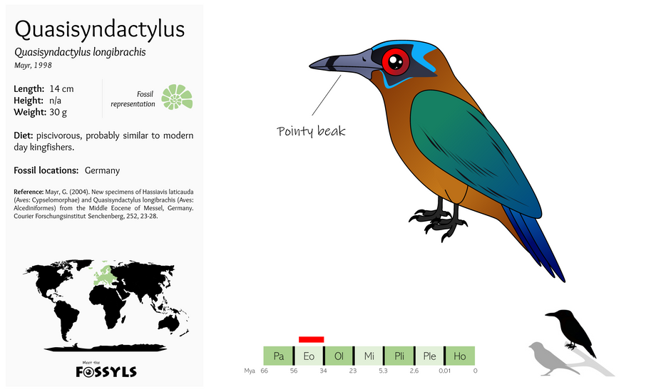 Quasisyndactylus%20longibrachis.png