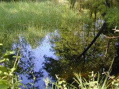 Lagoni Mercurago
