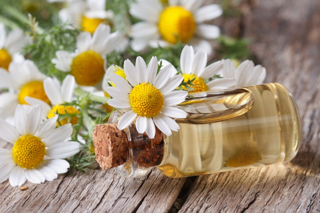 …but Roman chamomile essential oil smells sweeter!