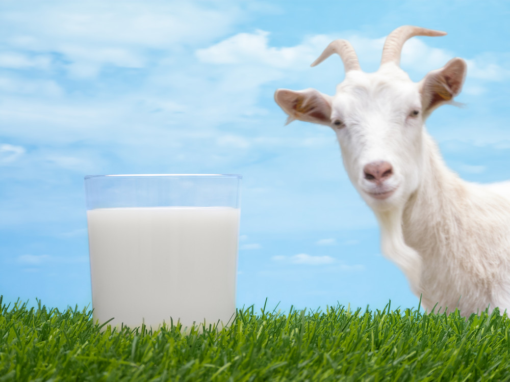goat-milk-benefits-article