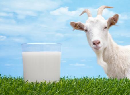WTF is…Goats Milk?!