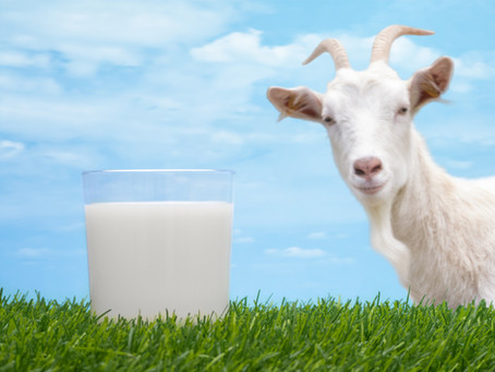 WTF is…Goats Milk?!