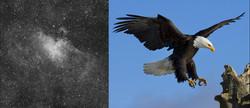 m016_23x10min_20130802_DDP_eagle