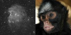 46-n2174_22x10min_SDMask_20141225_DDP_monkey