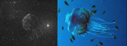 ic443_24x10min_SDMask_20141226_DDP_jellyfish