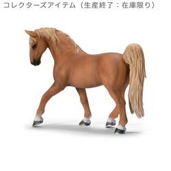 テネシーウィーカー馬(オス)