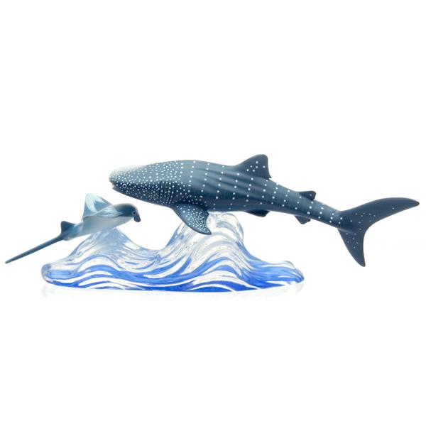 ジンベイザメ 遭遇