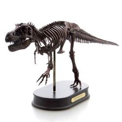 ティラノサウルス スケルトンモデル