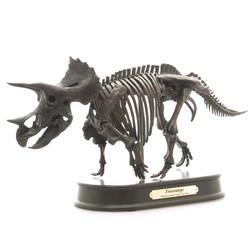 トリケラトプス スケルトンモデル