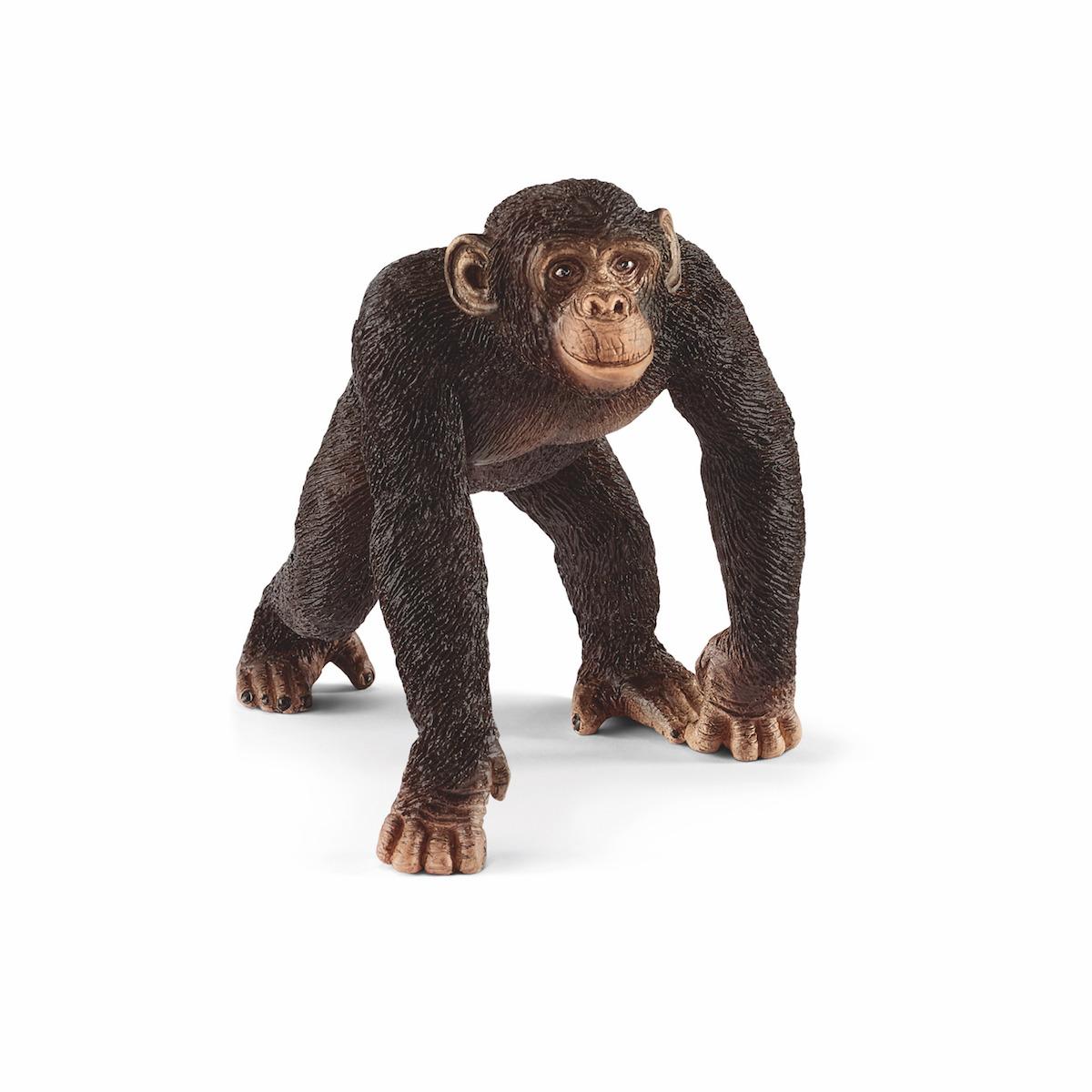14817 チンパンジー(オス)