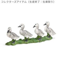 白鳥(仔)