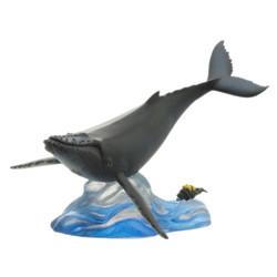ザトウクジラ 回遊