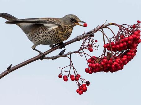 Fågelgruppen den 19 november…