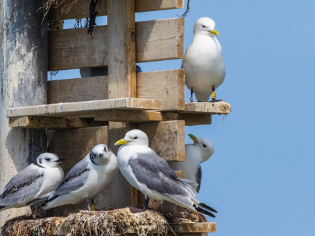 Fågelgruppen tisdagen den 8 oktober…