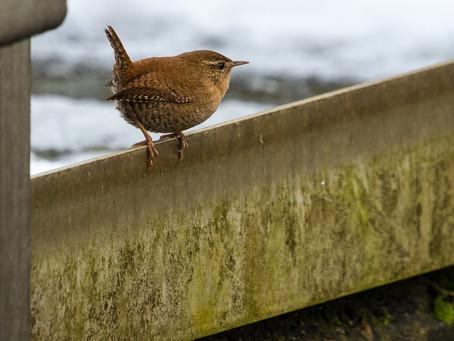 Fågelgruppen den 14 januari…