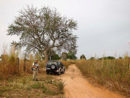 Natur i Gambia den 26 februari