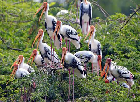 NaturFOTOgruppen den 30 mars...