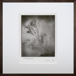 Branch seeking light, 2018