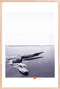 Driftwood #4