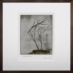Windblown branch, 2018