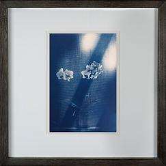 Orchid Cyanotype