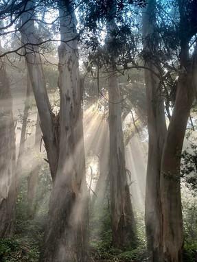 Fog + Sun + Eucs = Heaven