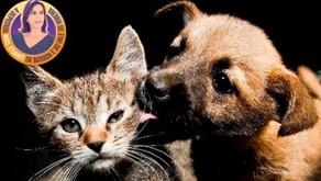 Contribuição para a defesa animal