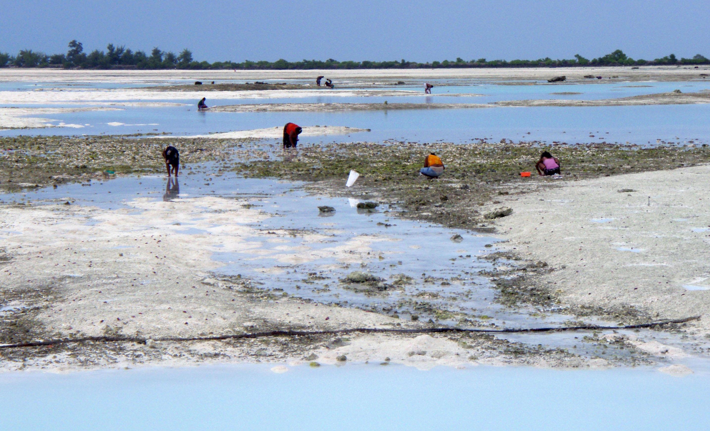 Intertidal flatsTarawa, Kiribati