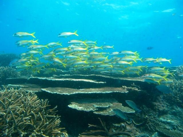 Halthy reef2_GBRMPA.JPG