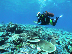 Coral reef health assessment