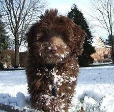 tottie-darwin-finnegan-snow-259x254.jpg