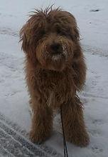 joon-gram-bella-snow-199x288.jpg