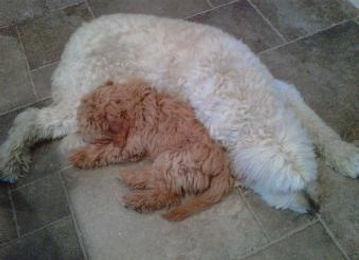 ester-gram-duffy-puppy-340x246.jpg