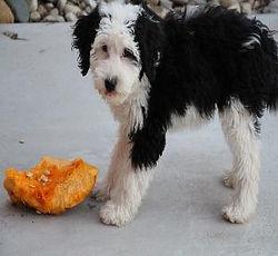 jenny-pumpkin-300x276.jpg