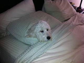 uli-cash-zoey-sleeping-bed.jpg