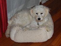 paisley-cash-charlie-bed-346x261.jpg