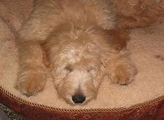 katie-buddy-quincy-sleeping-369x270.jpg