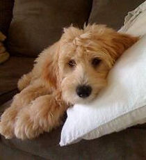 Joon-erics-lola-couch-240x263.jpg