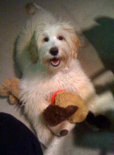 joon-eric-lola-stuffed-toy-225x305.jpg