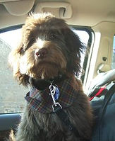 tottie-darwin-1-finn-haircut-240x293.jpg