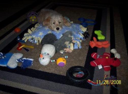 lindy-erics-indy-toys-373x274-504x373.jp